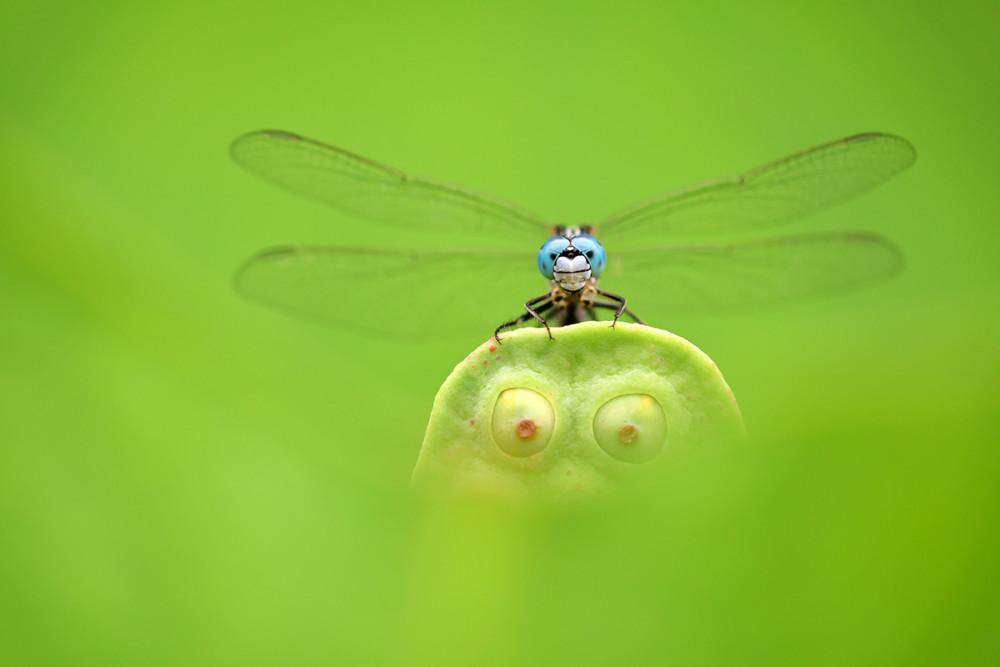 Fot. Minghui Yuan, Blue Eyes, Green Eyes