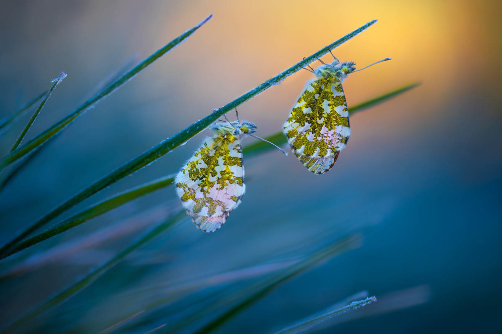 Fot. Petar Sabol, Cold Morning Tips