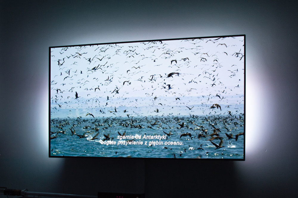 philips oled 803 review