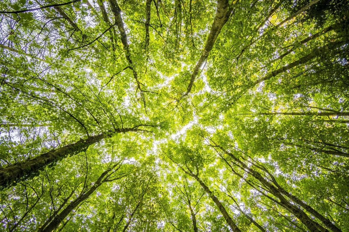 Amazońska dżungla radzi sobie coraz gorzej z magazynowaniem dwutlenku węgla