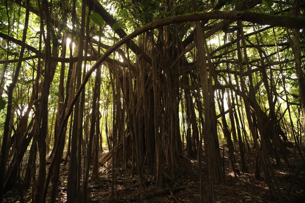 Puszcza Amazońska ma przerąbane. Z jednej strony wycinają ją na potęgę, a z drugiej tysiące pożarów