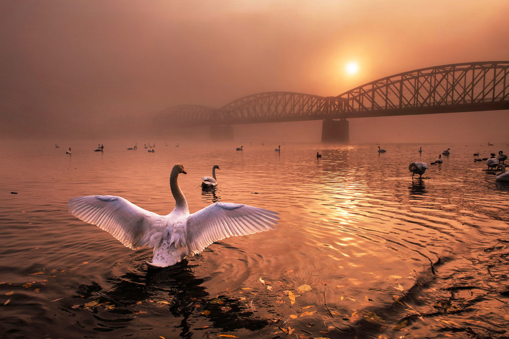 """Fot. Peter Cech (Czechy) """"Greeting the sun"""", zwycięzca kat. Ptaki"""
