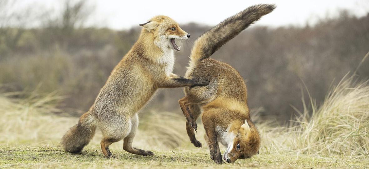 Comedy Wildlife Photography Awards 2019 dowodzi, że dzika przyroda potrafi być zachwycająco zabawna