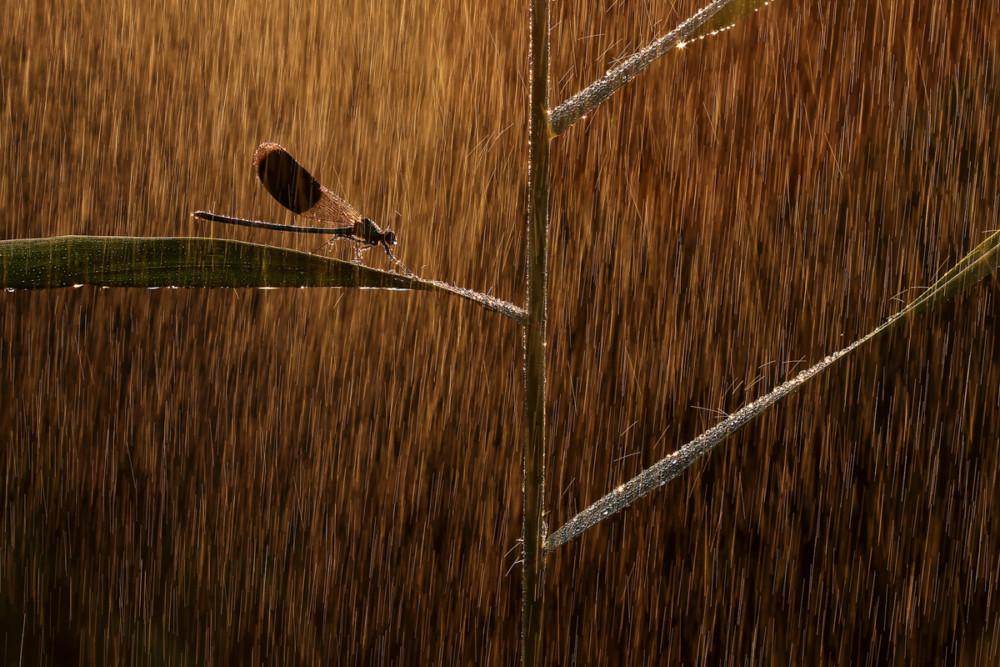 """Fot. Norbert Kaszás (Węgry) """"Golden rain"""", zwycięzca w kat. Inne zwierzęta"""
