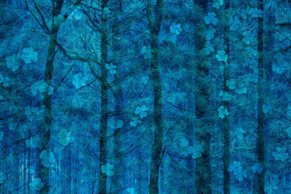 """Fot. Simone Baumeister (Niemcy) """"Happiness grows in trees"""", zwycięzca w kat. Sztuka przyrody"""