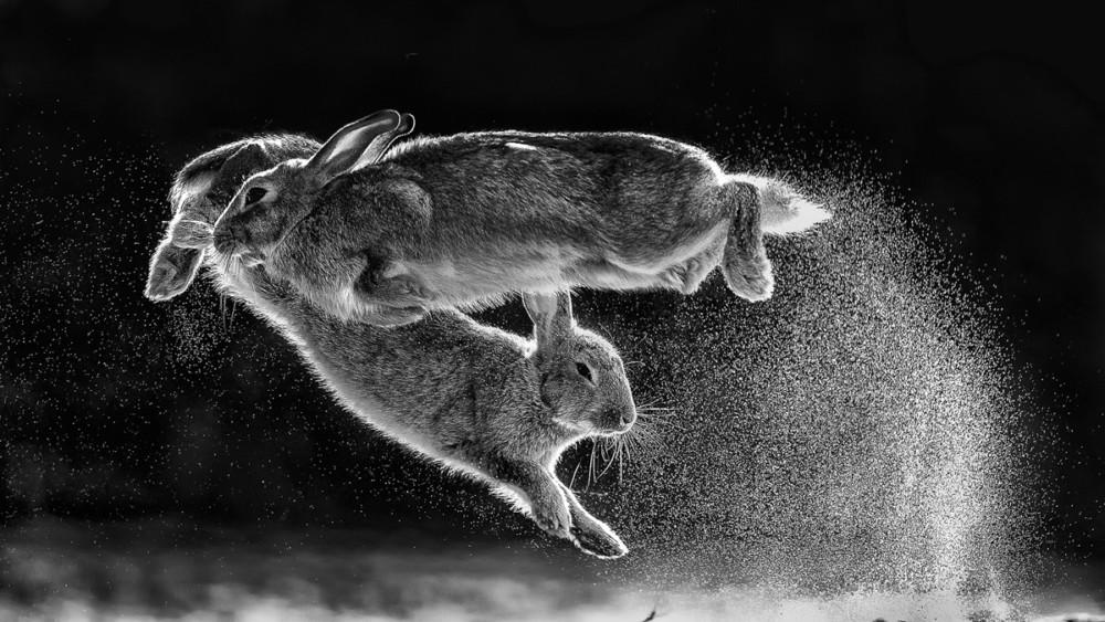 "Fot. Csaba Daroczi ""Jump"" | Nature Photographer of the Year 2019"