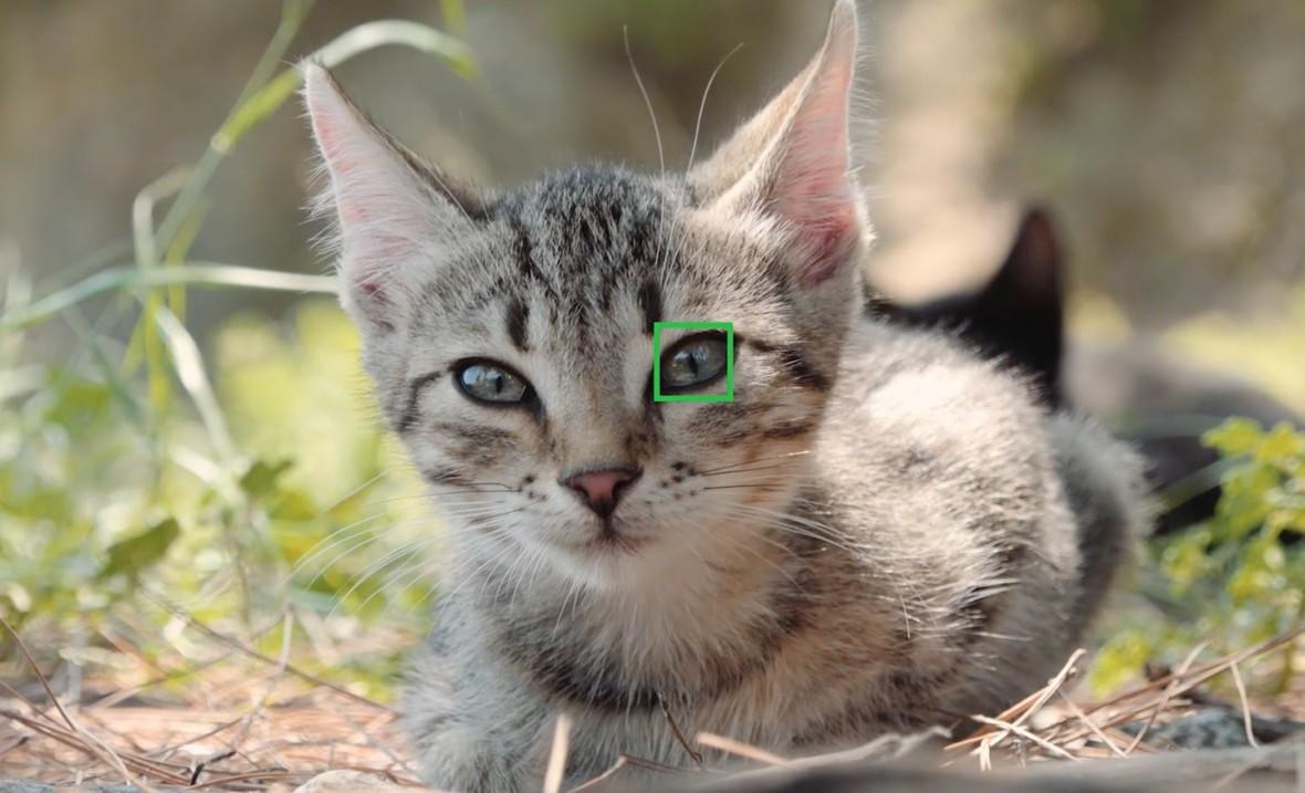 Przyszłością aparatów Sony będzie sztuczna inteligencja. Powstał zupełnie nowy dział AI