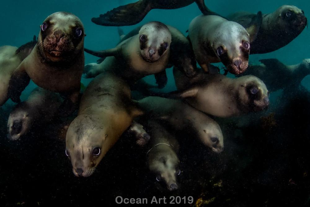 Kat. Życie morskie, wyróżnienie: Celia Kujala