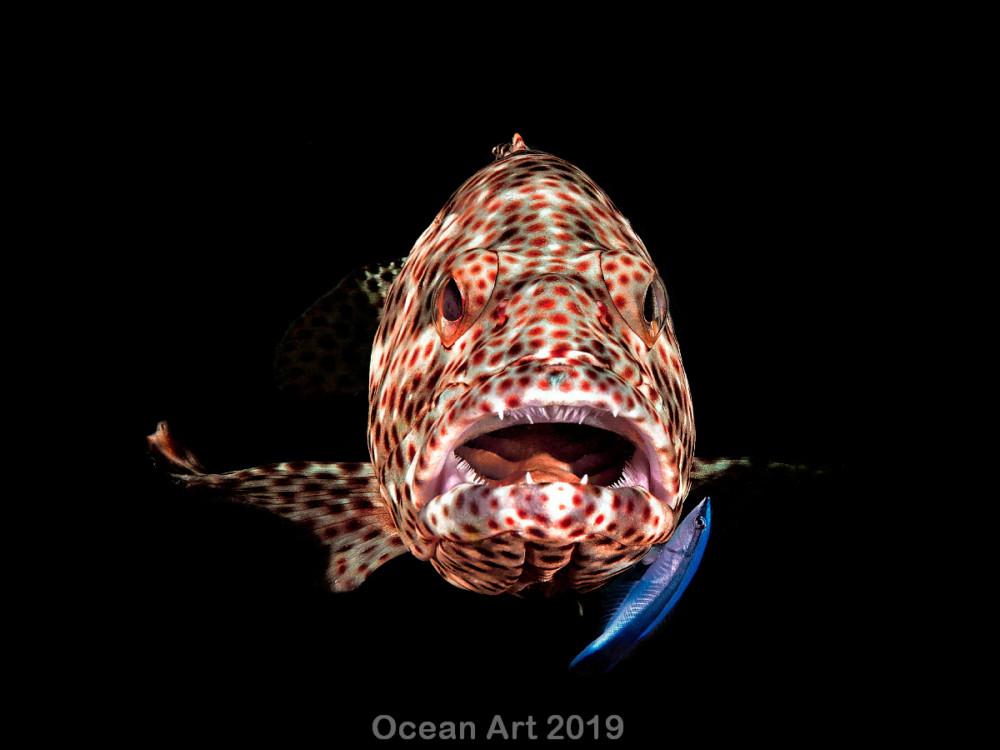 Kat. Compact Marine Life Behavior, 1. miejsce: Ferenc Lorincz