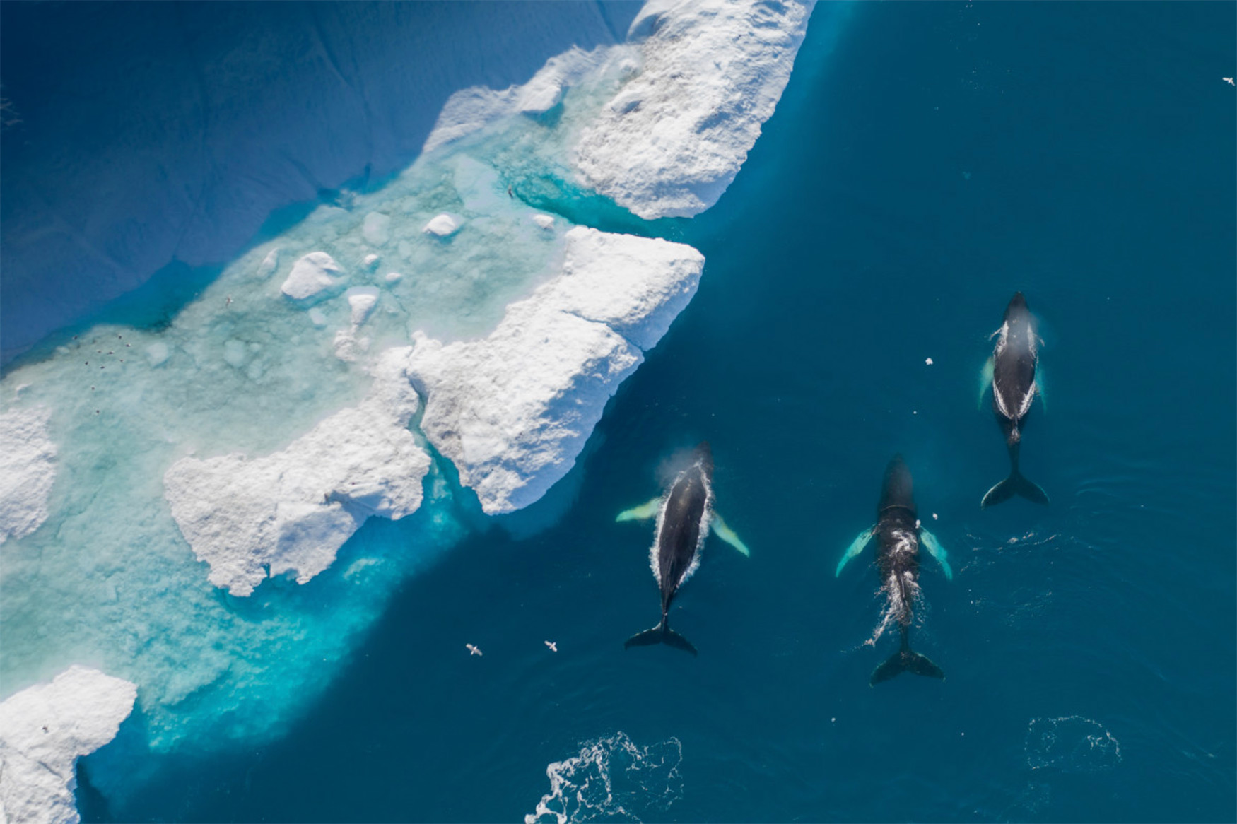 5th Anniversary Prize: 'The Beauty of Greenland from Above' fot. Albert (Holandia)