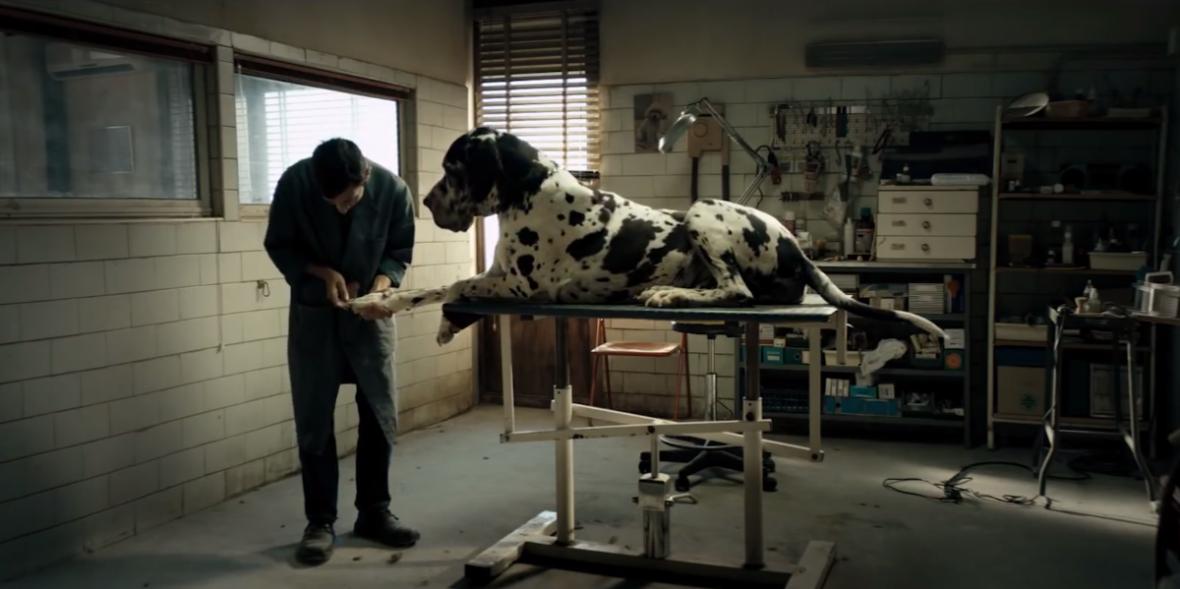 Co w nowym filmie Matteo Garrone'a robi Popek? Dogman – recenzja