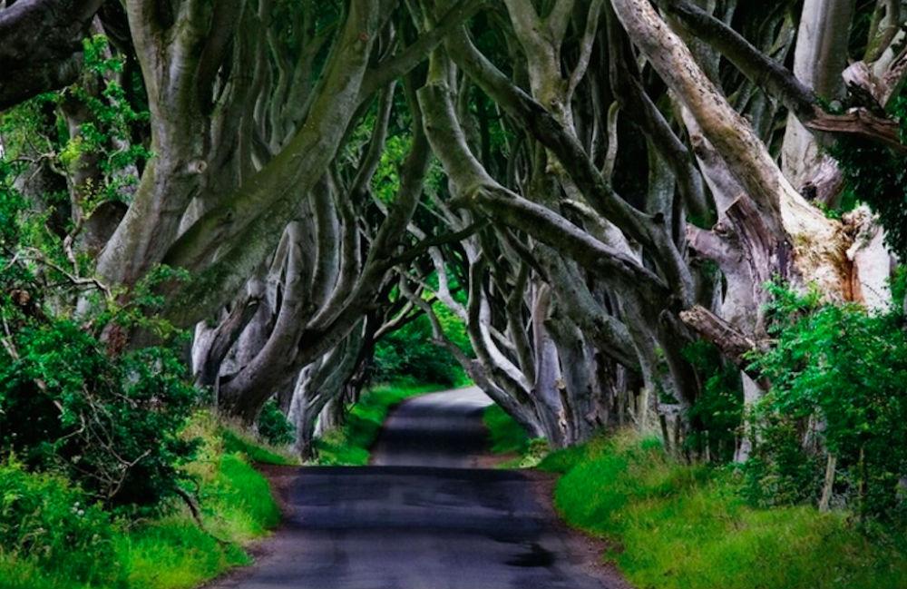 gra o tron dark hedges