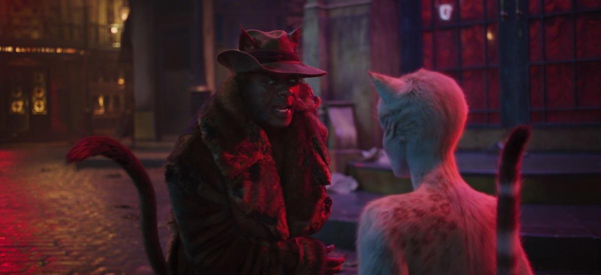 Koty - kadr z filmu
