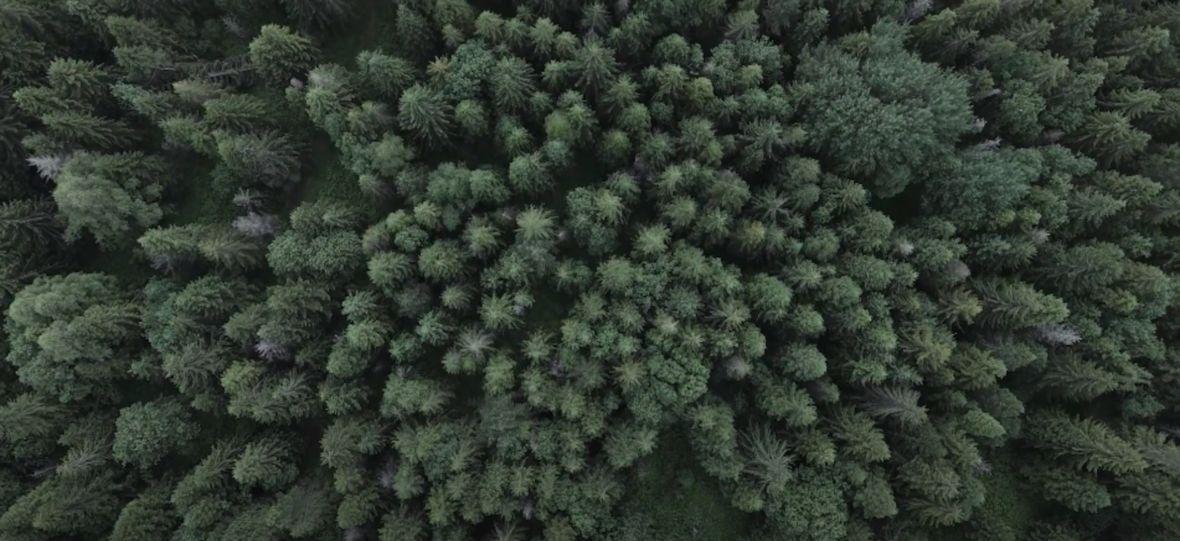 """To nie jest kadr z """"W głębi lasu"""", ale zapowiedź nowej serii Gonciarza. O czym tym razem opowie youtuber?"""