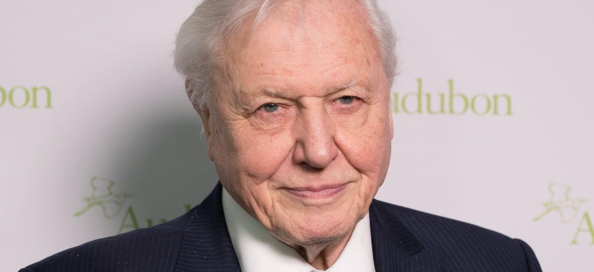 Sir David Attenborough założył konto na Instagramie, aby ratować naszą planetę. Profil stał się hitem sieci