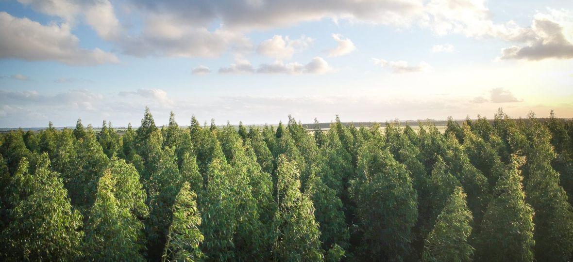 """""""Gdzie sąpieniądze za las?"""" – pyta Tymek w nowym utworze. Klip do """"RELAJATE"""" stworzył Krzysztof Gonciarz"""