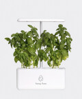 Maxi Flora - large hydroponic garden, Fancy Flora