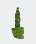 Sansewieria Cylindryczna Warkocz w zielonej betonowej czaszce flower, Plants & Pots