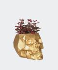 Nerve plant in a golden concrete skull, Plants & Pots