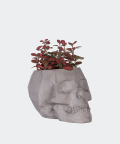 Nerve plant in a grey concrete skull, Plants & Pots