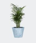 Parlour palm in a blue hex concrete pot, Plants & Pots