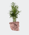 Parlour palm in a rose gold concrete skull, Plants & Pots