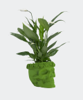 Peace lily in a green concrete skull, Plants & Pots