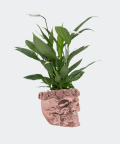Peace lily in a rose gold concrete skull, Plants & Pots