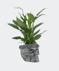 Peace lily in a steel concrete skull, Plants & Pots