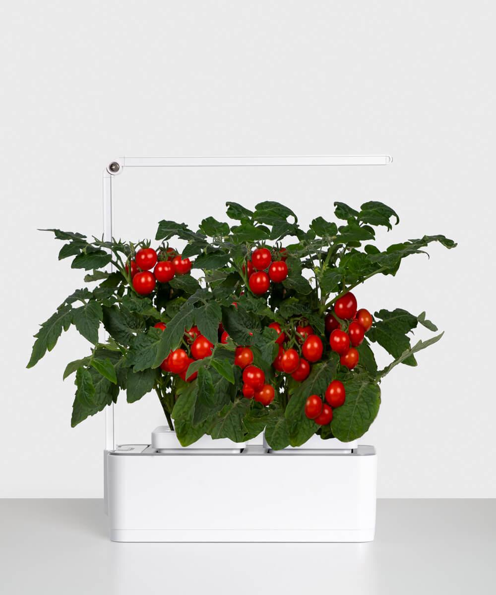 Eco Flora