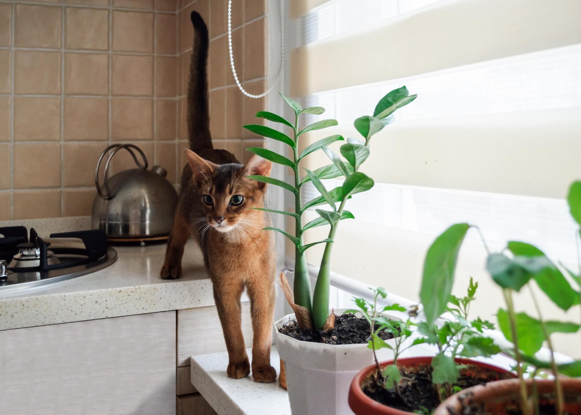 Rośliny bezpieczne dla kotów