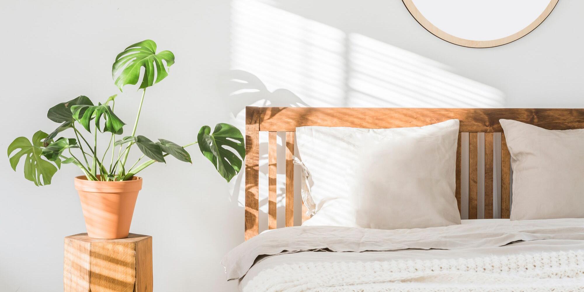 Rośliny do sypialni, oczyszczające powietrze - Jak poprawić jakość snu?