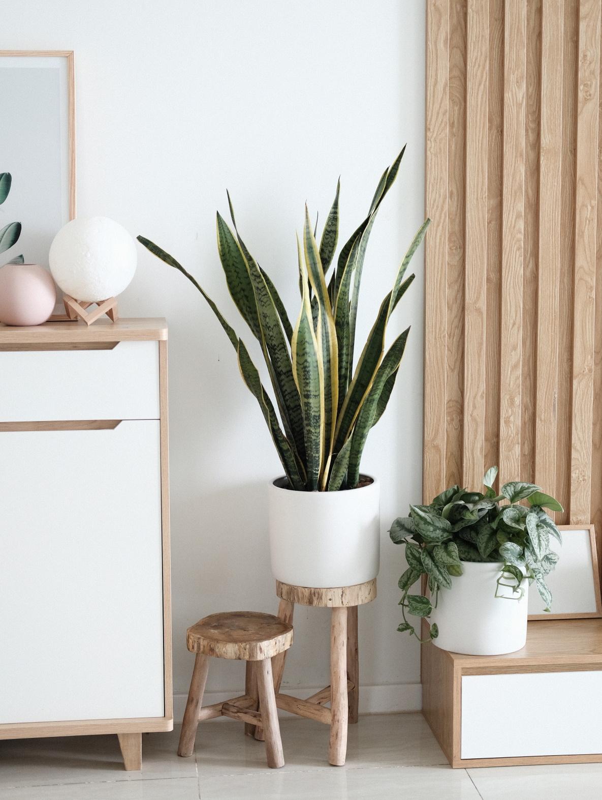 Rośliny w przedpokoju