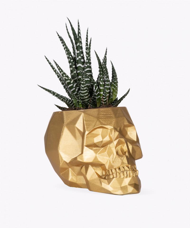 Haworsja w złotej betonowej czaszce