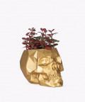 Fitonia Różowa, w złotej betonowej czaszce