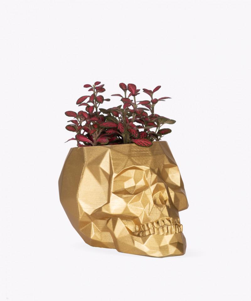 Fitonia w złotej betonowej czaszce