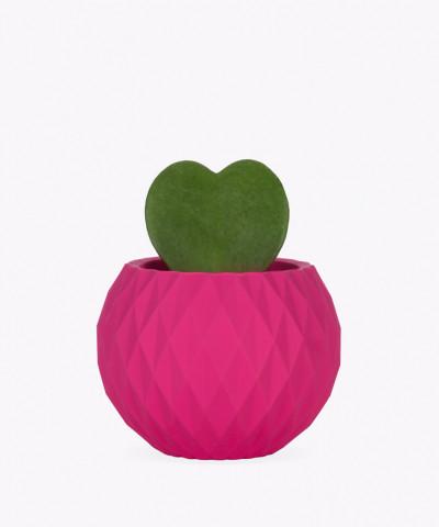 Hoja Kerri w różowej betonowej kuli