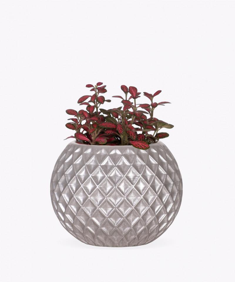 Fitonia Różowa w srebrnej betonowej kuli