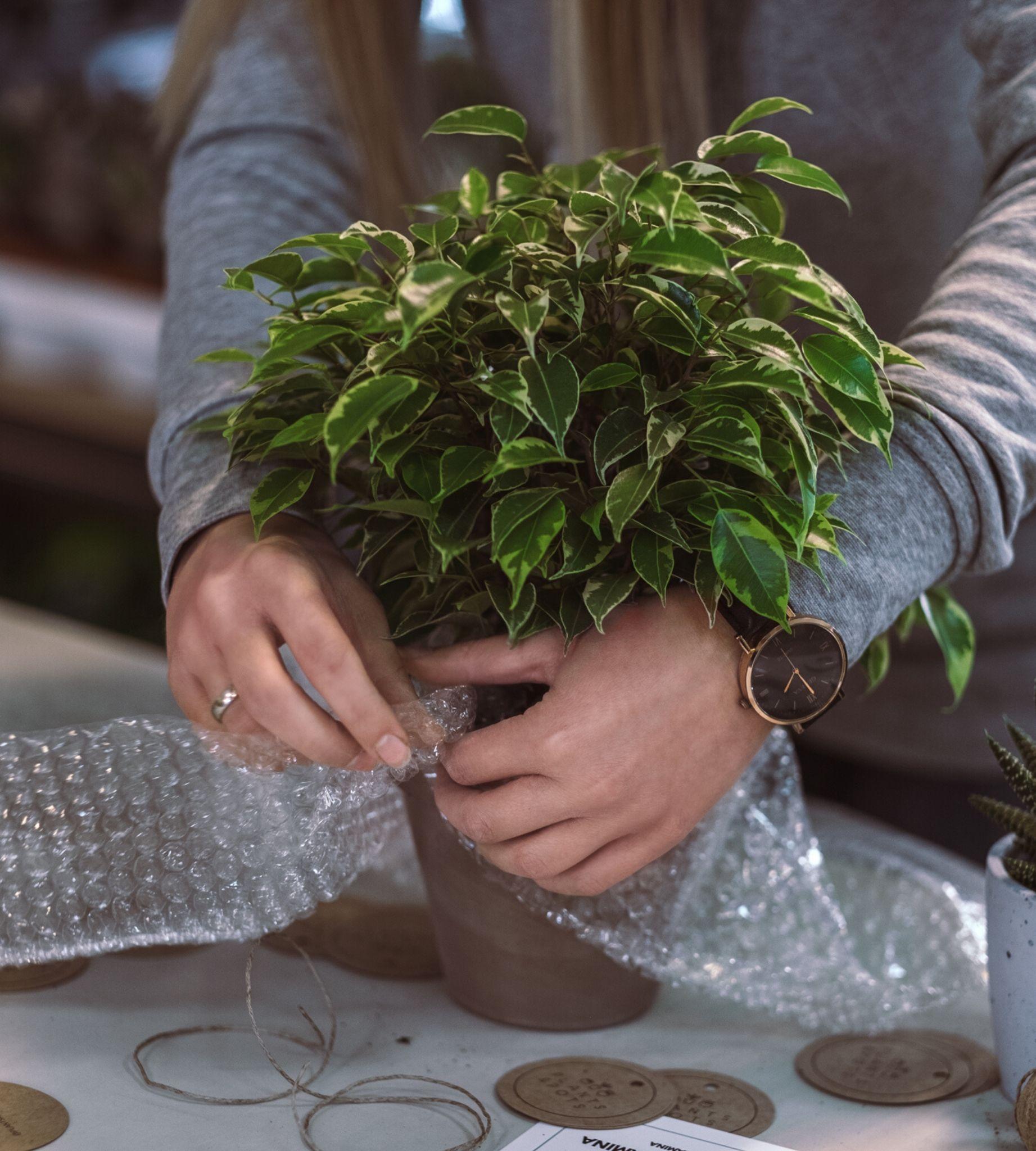 Zabezpieczanie rośliny przed wysyłką