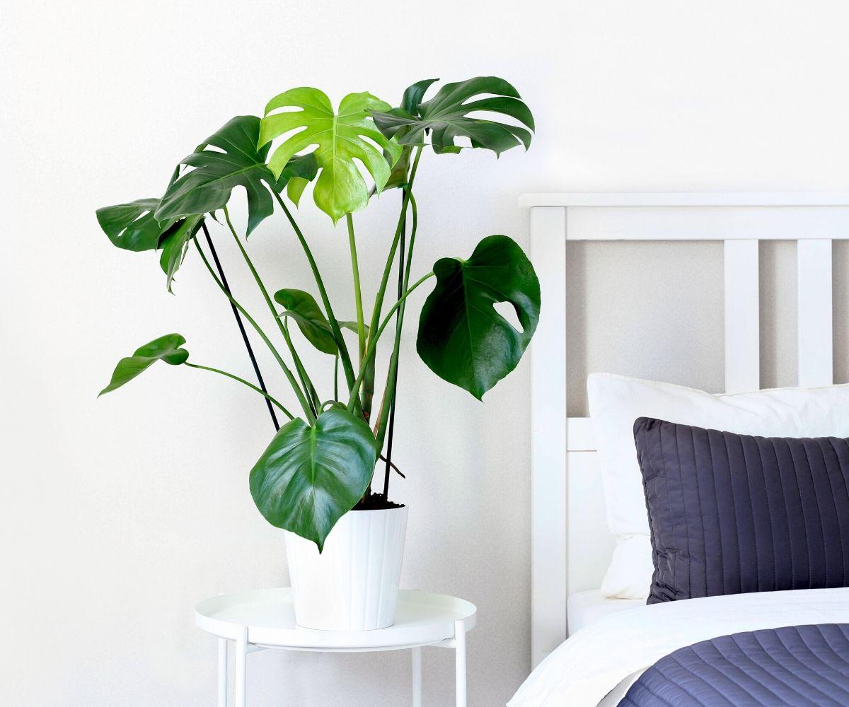Duże rośliny
