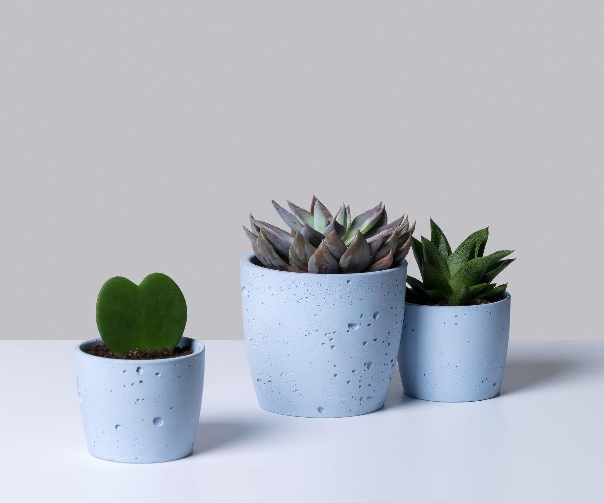 Małe rośliny