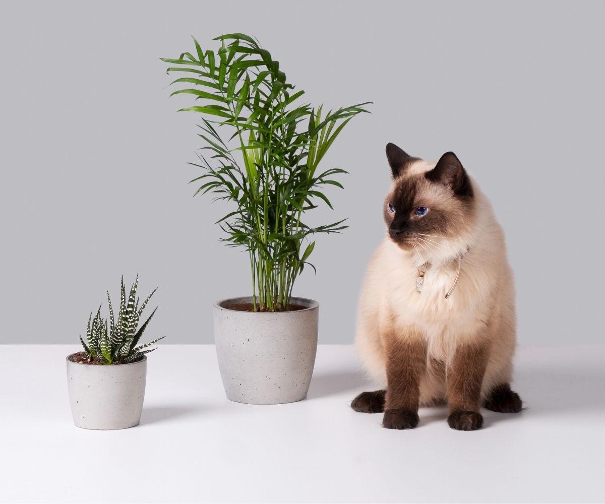 Średnie rośliny
