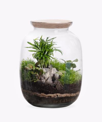 Las w słoiku z Chamedorą - zestaw DIY