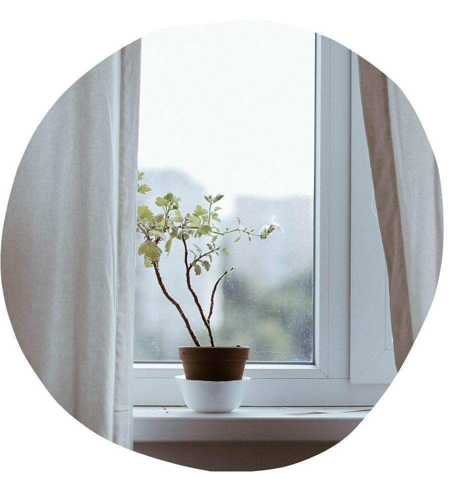 Planta en maceta en el alféizar de la ventana