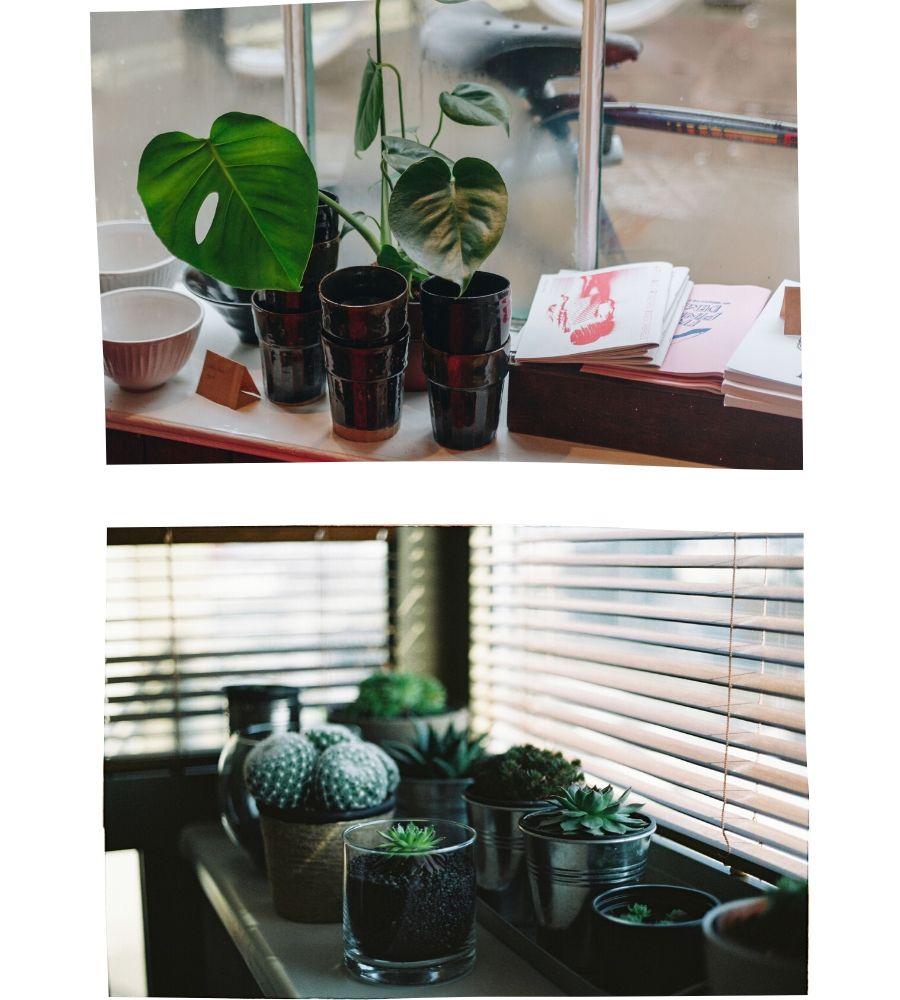 Plantas en macetas en el alféizar de la ventana