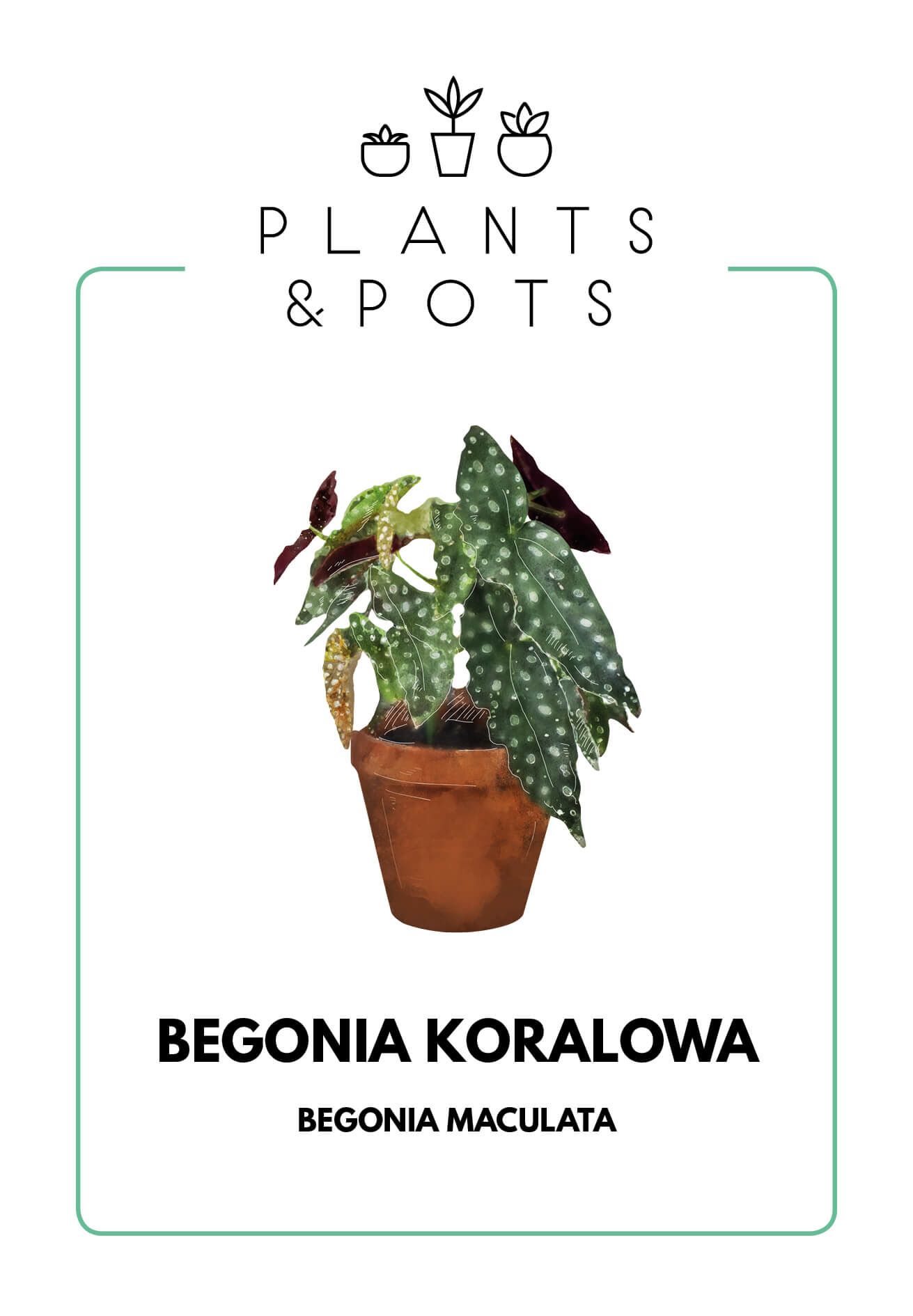 Begonia Koralowa - Pielęgnacja rośliny