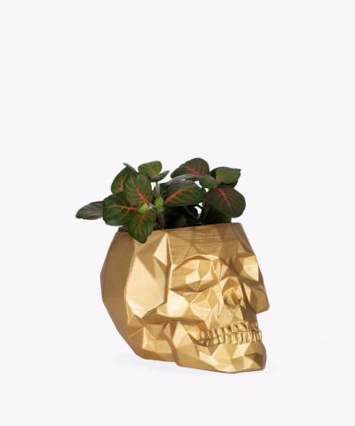 Fitonia zielona w złotej betonowej czaszce