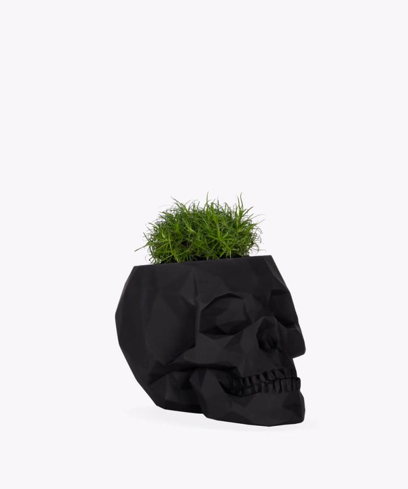 Karmnik rozesłany w czarnej betonowej czaszce
