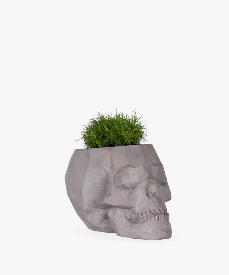 Karmnik rozesłany w szarej betonowej czaszce