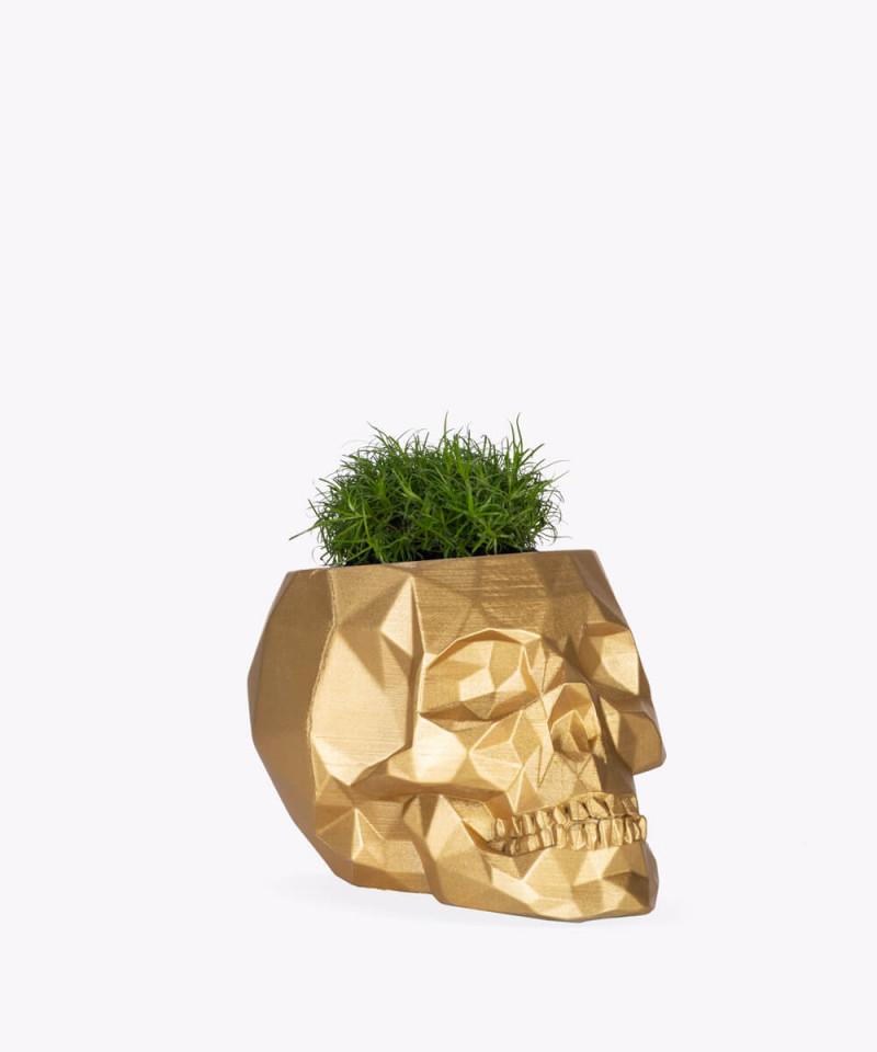 Karmnik rozesłany w złotej betonowej czaszce